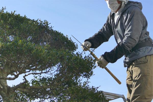 三多摩造園業協同組合 募集要項